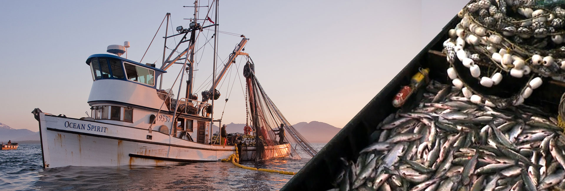 Ketchikan Commercial Seine Fishing: Sunset Catch