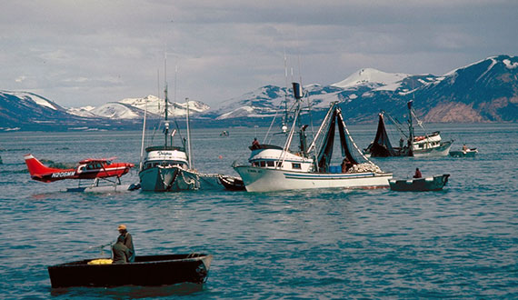 Ketchikan's Commercial Fisherman