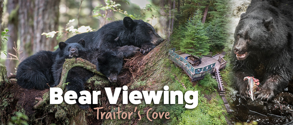 Baranof Wildlife Private Charter