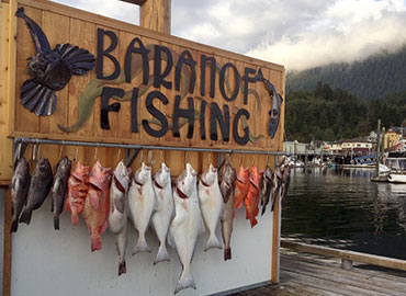 Alaska Fish Species: Salmon, Halibut, Cod, and Rockfish